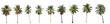 Leinwandbild Motiv Difference of coconut tree isolated on white.