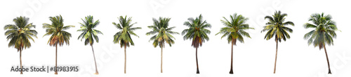 Tuinposter Palm boom Difference of coconut tree isolated on white.