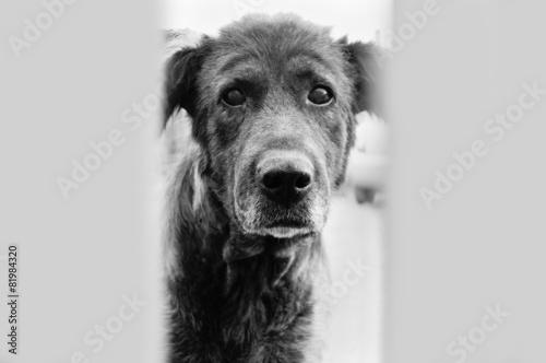 Obraz na plátne Глазами собаки