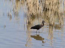 Birds Of The Ebro Delta