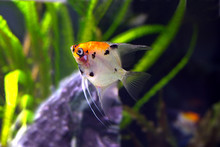 Colorful Exotic Fishe Swims In Water Side View