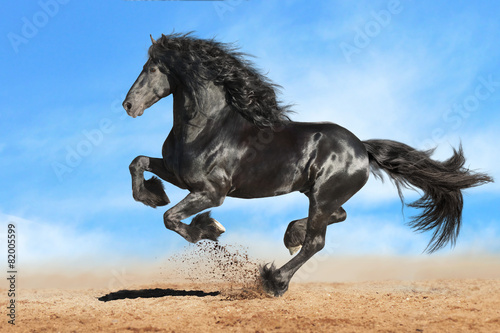 Obraz na plátně Running gallop Andalusian black horse