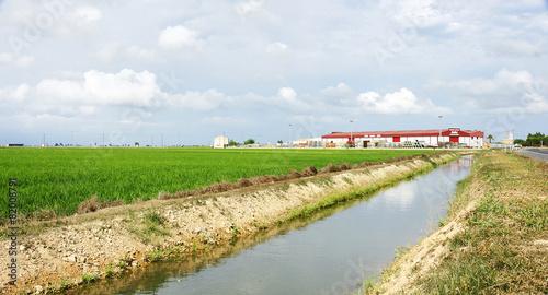 Foto op Plexiglas Kanaal Canal de riego en el Delta del Ebro, Amposta, Tarragona