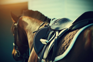 Saddle with stirrups on a back of a horse