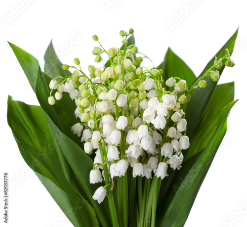 Wall Murals Lilies of the Valley with leaves isolated on a white background.