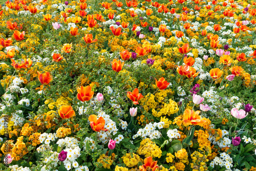 Giardino fiorito Canvas Print