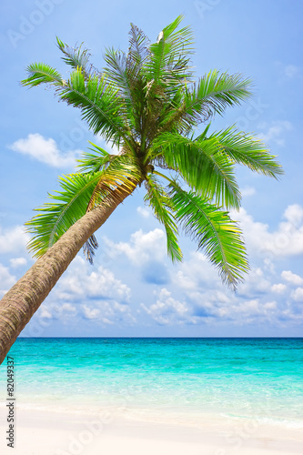 Fototapety, obrazy: Tropical white sand beach with palm tree