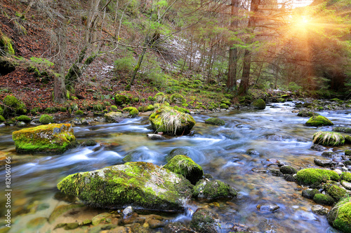 Aluminium Prints Forest river Mountain river in forest