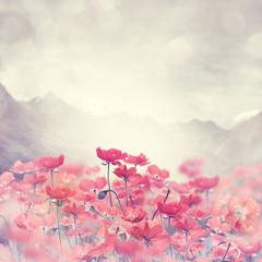 Obraz Poppy Flowers