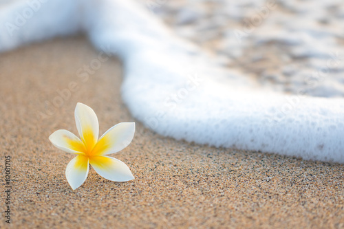 Fotografiet  Plumeria Flower on Beach