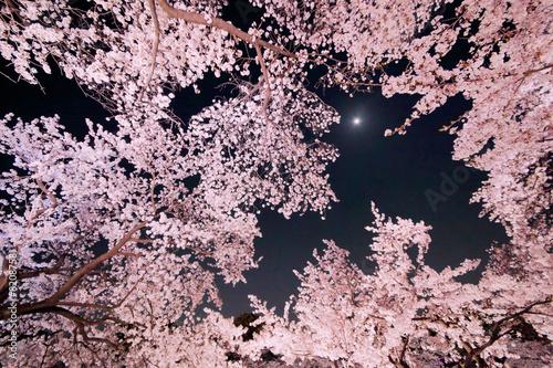 Foto op Plexiglas Kersen 夜桜と月