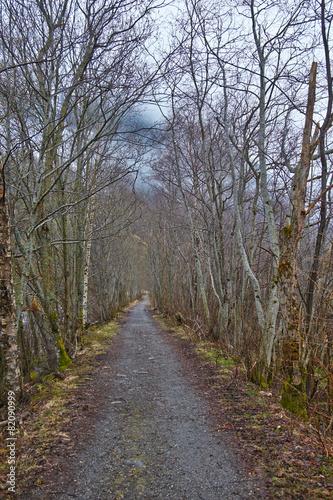 Fotobehang Scandinavië walking road