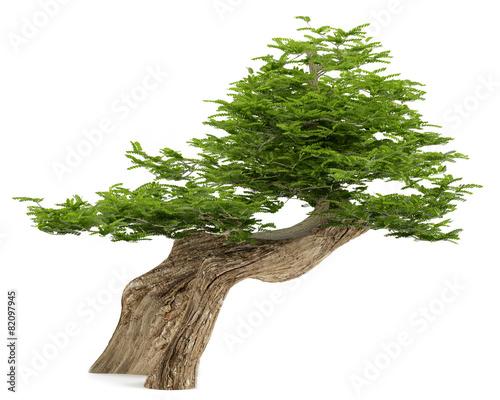 Fotobehang Bonsai Exotic tree. Bonsai