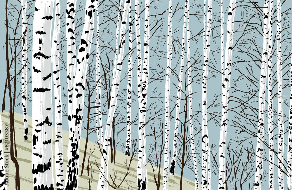 birchwood in the spring