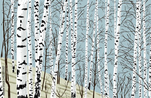 birchwood in the spring Canvas Print