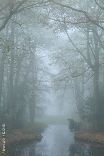 Wall Murals Forest Pond in a landscape park on a foggy, spring day.