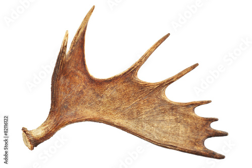 Moose antler isolated on white Wallpaper Mural