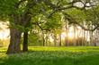 Leinwandbild Motiv Sunlight in the green forest springtime