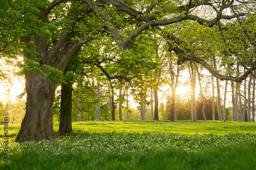 Tuinposter Bomen Sunlight in the green forest springtime