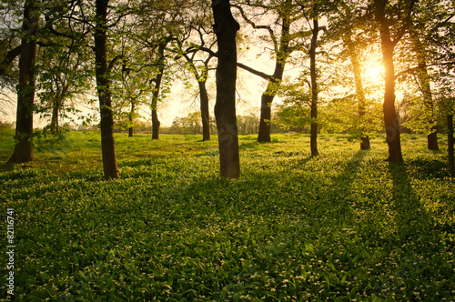 Foto  Sunlight in the green forest springtime