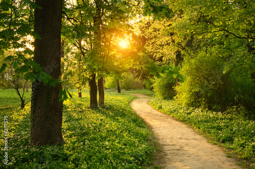 Obraz Path on the park - fototapety do salonu