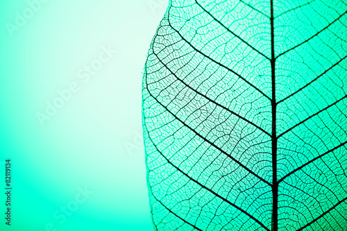 Canvas Prints Decorative skeleton leaves Skeleton leaf on green background, close up