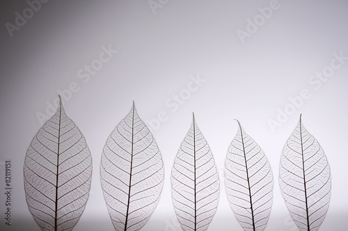Photo sur Aluminium Squelette décoratif de lame Skeleton leaves on grey background, close up