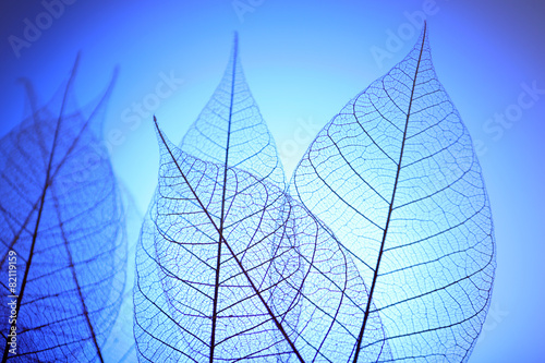 Tuinposter Decoratief nervenblad Skeleton leaves on blue background, close up