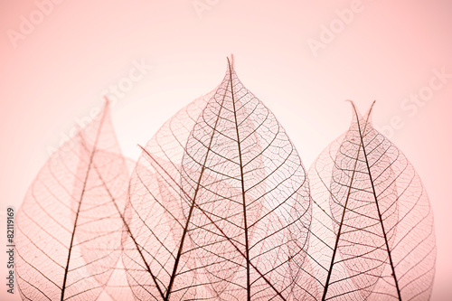 Poster Squelette décoratif de lame Skeleton leaves on pink background, close up