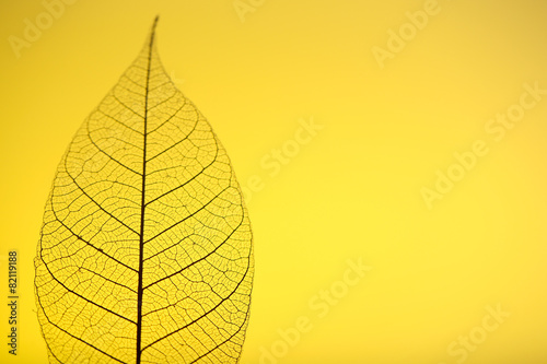 Poster Squelette décoratif de lame Skeleton leaf on yellow background, close up