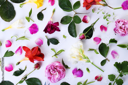 Leaves and petals of spring flowers on white background,