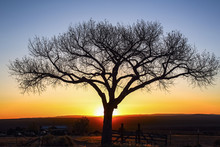 Silhouette Of Tree Against Sunset Sky In Rural Landscape