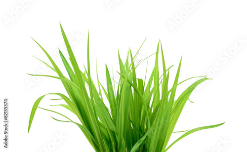 Foto op Aluminium Gras Green grass isolated on white
