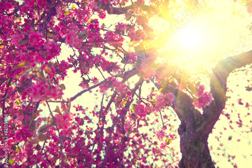 Spring blossom. Beautiful nature scene with blooming tree