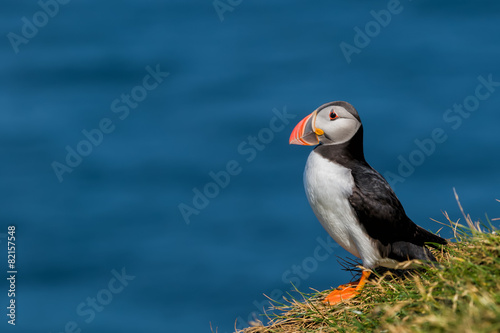 Tela Puffin portrait on the blue sea background