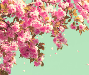 Fototapeta Współczesny Spring blossom. Beautiful nature scene with blooming tree