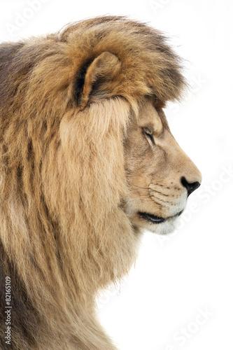 Fototapety, obrazy: Noble king