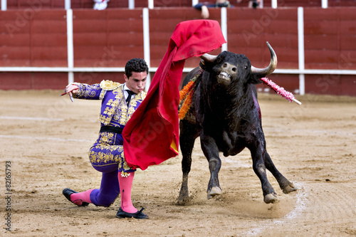Matador in the bullring, the bull fighting