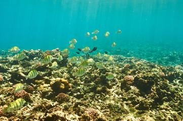 Fototapeta na wymiar Coral reef and fish