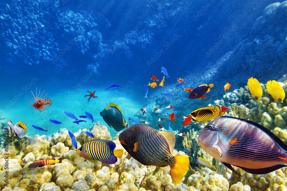 Fototapeta Underwater world with corals and tropical fish.