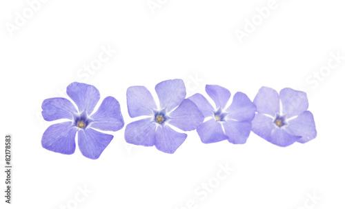 Valokuva periwinkle flower