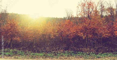 Foto op Aluminium Aubergine Beauty landscape autumn forest view