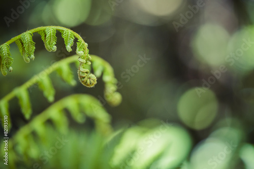 Foto auf Leinwand Neuseeland Unravelling fern frond closeup, one of New Zealand symbols.