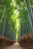 Fototapeta Na drzwi - Bamboo Forest in Japan, Arashiyama, Kyoto