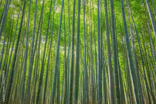 Foto op Plexiglas Bamboe arashiyama bamboo forest, Kyoto, Japan