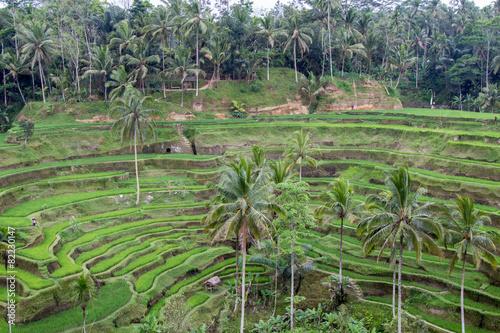 Foto op Canvas Pistache Rice Terrace At Tegalalang, Bali, Indonesia