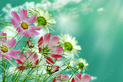 Poster Imagination daisy flowers on blue sky background
