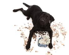 Dog Expenses