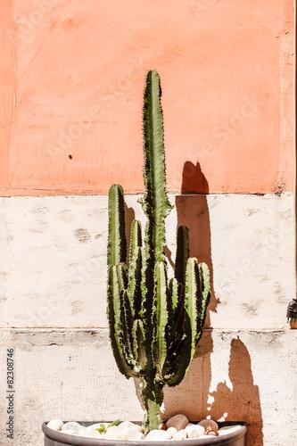 Papiers peints Cactus cactus near wall