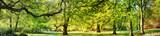 Fototapeta Las - Park in spring time